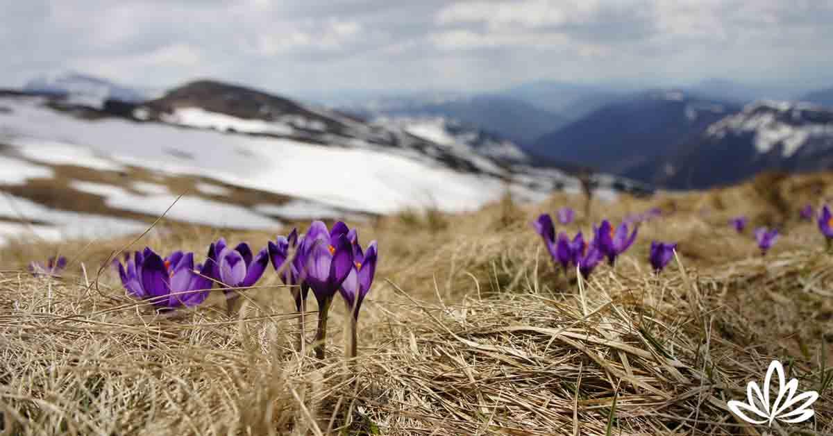 Spring Equinox: Energy Healing Rituals