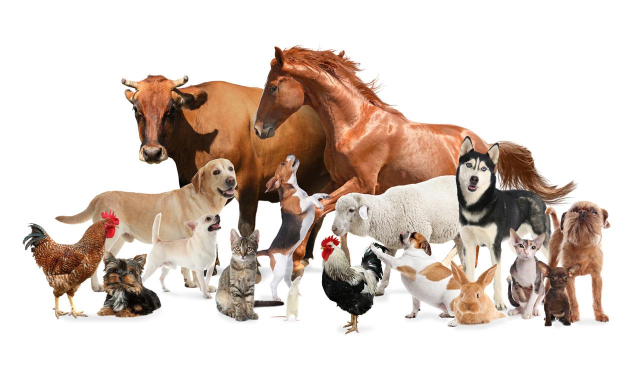 Animal menagerie