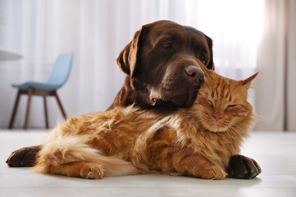 Dog snuggling w/ cat